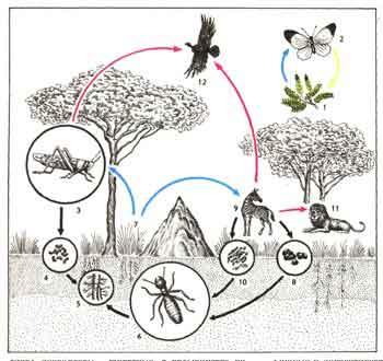 Значение жизнедеятельности животных
