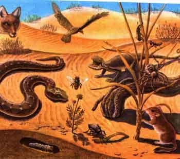 Круговорот веществ в пустынях средней